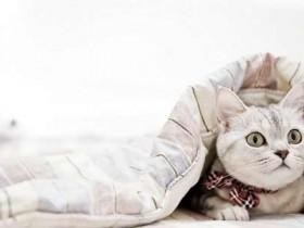 网络传销又出新形式,云养猫骗局是怎么回事?